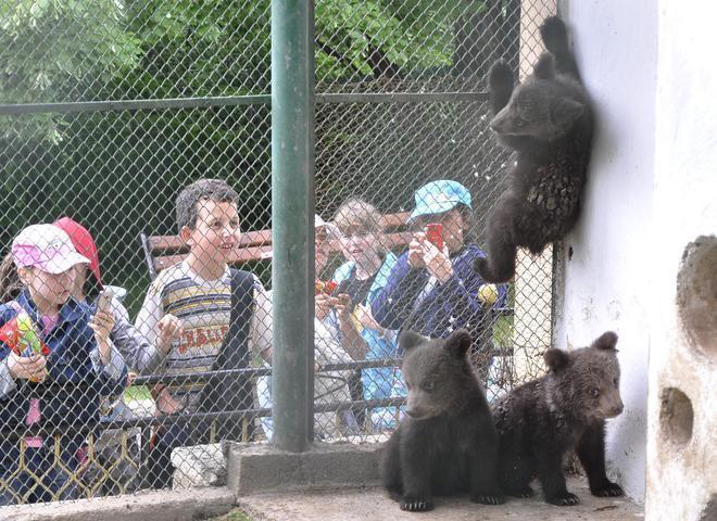 Atrakcii Zooparkove I Akvariumi Zoopark Ayazmoto Gr Stara